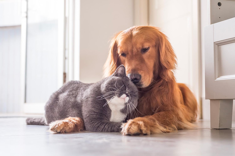 alimentazione olistica per cane e gatto