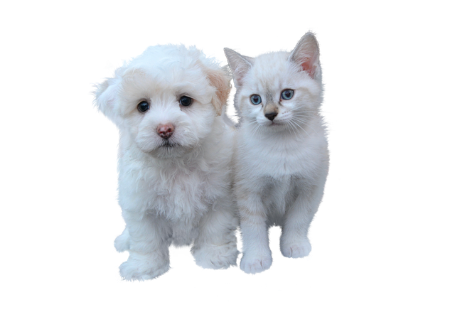 cibi grain free per cani e gatti