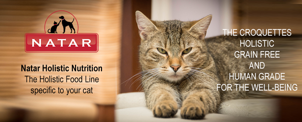 Holistic Nutrition for Cats