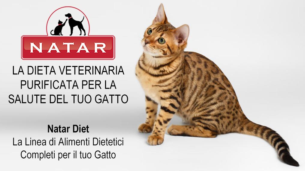 Natar Diet Gatto