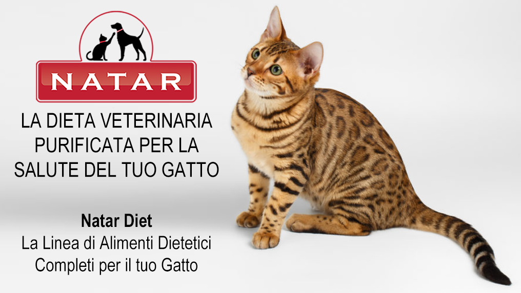 Natar Diet Gatto