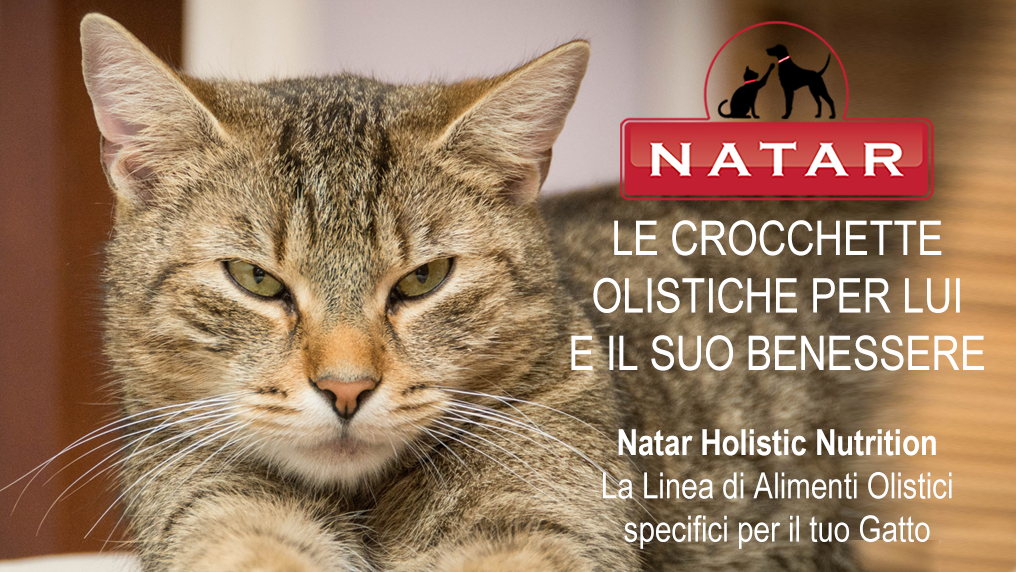 Natar Holistic Nutrition Gatto